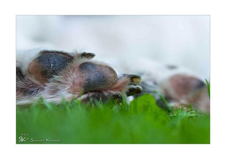Hondenpoot... - Onze luie hond in het gras... eens een keer een ander lichaamsdeel dan zijn kop gefotografeerd...
