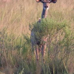 Achter deze boom ben ik veilig