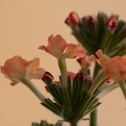 Bloemen op het balkon