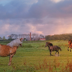 Paarden Appingedam