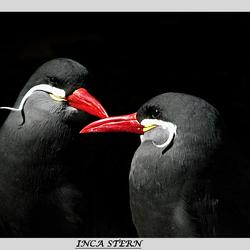Inca Stern.