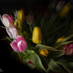 Soft flashlight over the tulips