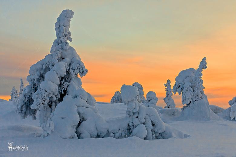 Fins Lapland - Winter wonderland in Iso Syote, Lapland.