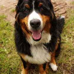 sNoOpY-dog