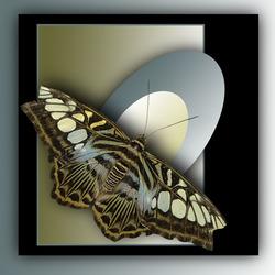 vlinder als kunst.............