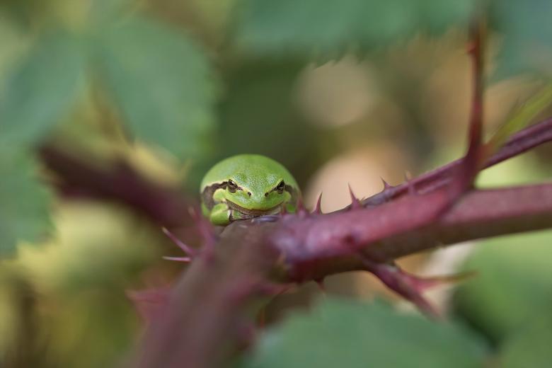 The guardian - Wat zijn het toch koddige beestjes. Dit kleine dikkertje zat tevreden de ingang van het bramenbos te bewaken.