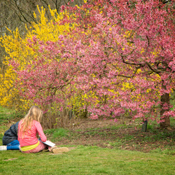 Arboretum-Belmonte 3.
