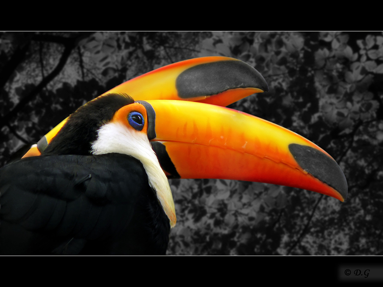 Paint The Sky - Deze 2 prachtige paradijsvogels, toekans, zijn herkenbaar voor iedereen. Hun prachtige verschijning, maakt het tot bijzondere vogels.