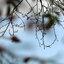 Fijne takjes van een boom