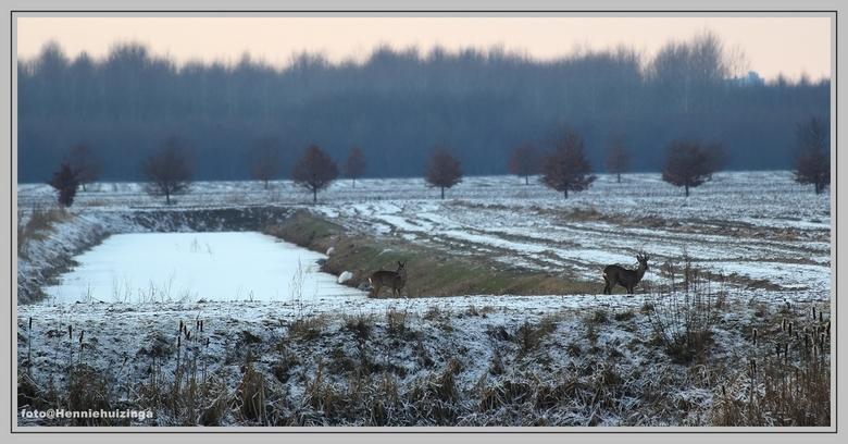 Herten en reigers - Herten en reigers<br /> <br /> Zag de herten, en tot mijn verbazing zilverreigers op de achtergrond.<br /> Plaats deze foto, ho