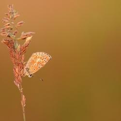 Vlindertje bij avondlicht