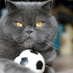 Soccer Chica