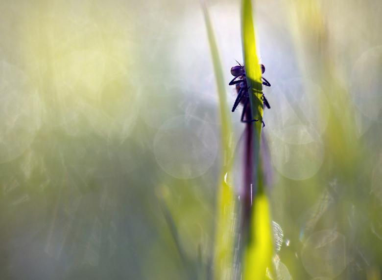 fooling in the grasses - Foto van alweer een tijdje geleden. April om precies te zijn. Het zachte voorjaar zorgde voor vroege uitsluipingen van de vuu