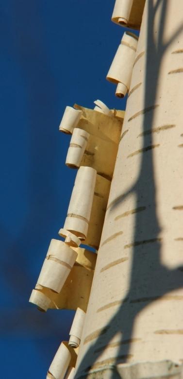 Boomschors - Deze foto is gemaakt naar aanleiding van een foto opdracht. De opdracht was boomschors
