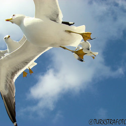 vogel vrij