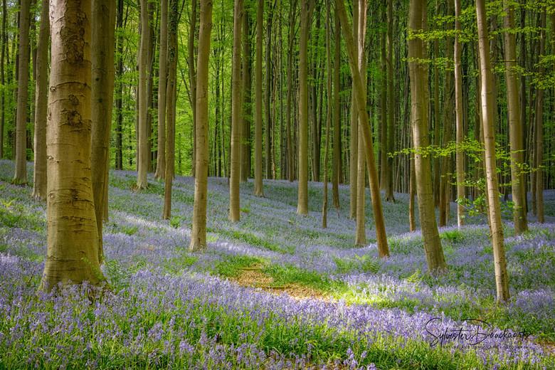 Forêt de Fleurs - Als Moeder natuur indruk wil wekken, dan doet zij dat met kracht en tederheid.