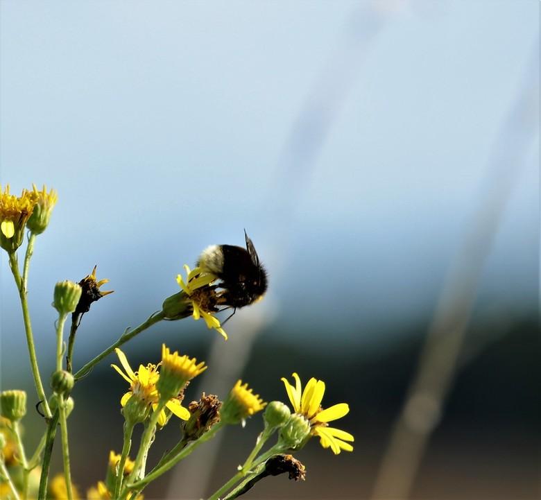 De Braakman - Op een zonnige dinsdags middag in het natuurgebied de Braakman.