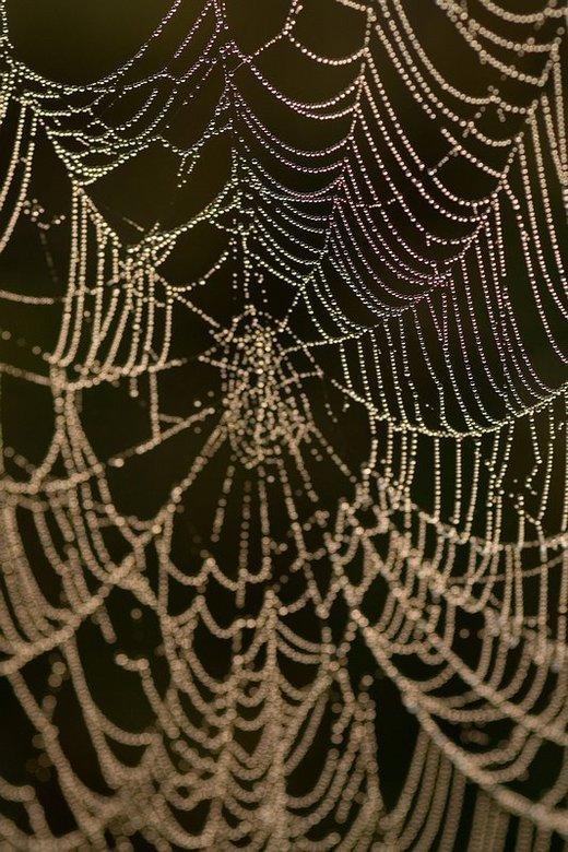 Spinneweb - Door het opkomende zonnetje komt er een soort regenbooggloed op het web