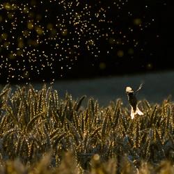 De dansende muggen van Rugard
