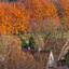 Herfst Wageningse Eng