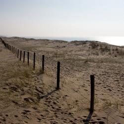 Kennemer duinen vroege voorjaar