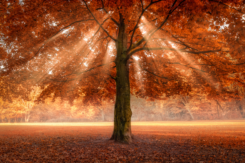 Autumonous Tree - Some things are just to good to be true…<br /> <br /> (c)2017 martijnvandernat.nl all rights reserved