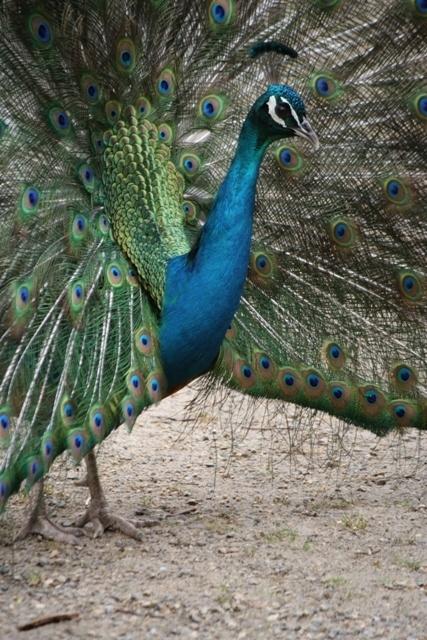 Urimbirra Wildlife Experience - Urimbirra Wildlife Experience