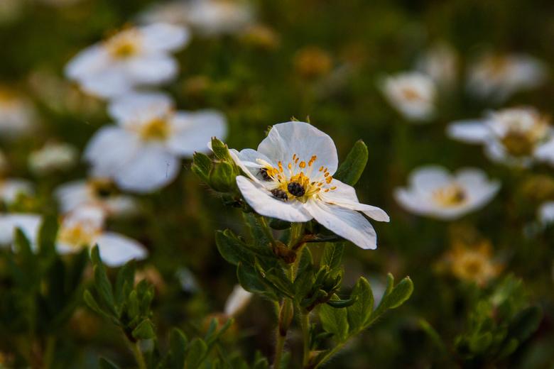 3 Insecten op een bloem