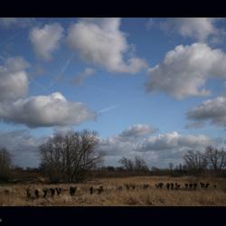 Lekdijk bij Schoonhoven