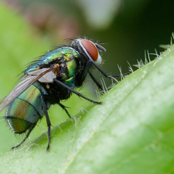 Just a Fly