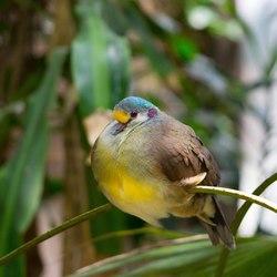 Vogel Avifauna