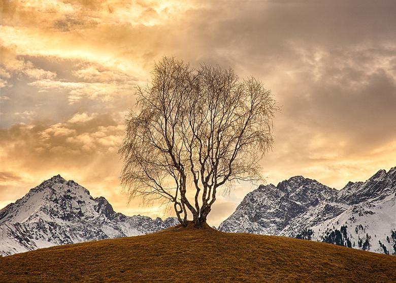 Gouden wereld - In een gouden wereld vol kansen reiken de takken van de verbeelding naar grote hoogte!