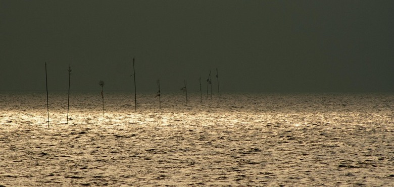waddenzee - in de vroege ochtend op de waddenzee.