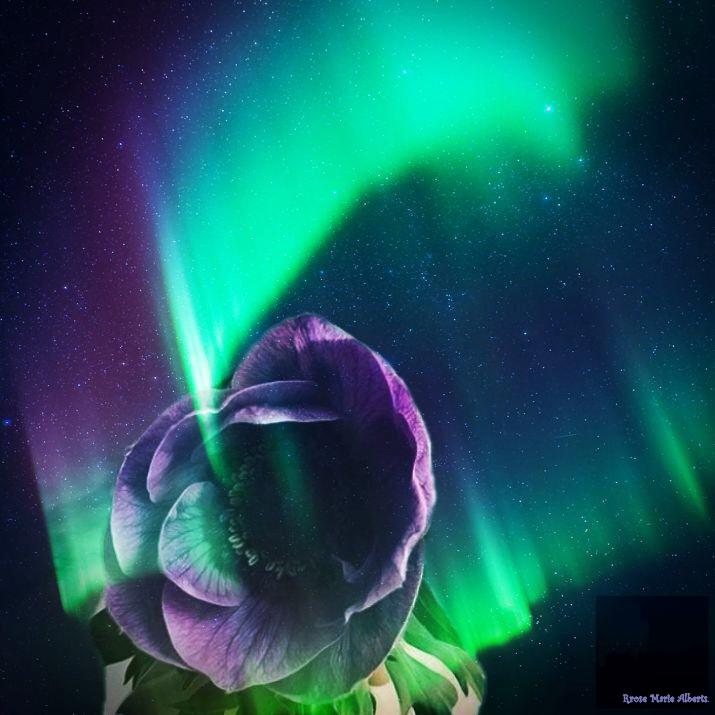 Bloem in Noorderlicht