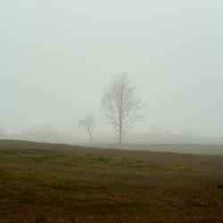 Bomen en herten in zee mist