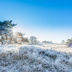 Brunssummerheide frosty morning