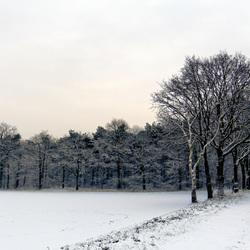 Bosrand in de sneeuw