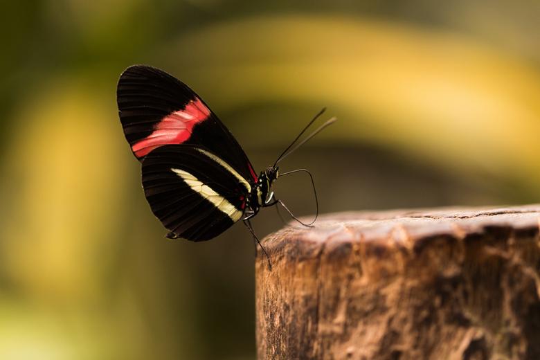 Butterfly - Dagje naar de vlindertuin geweest in Luttelgeest.