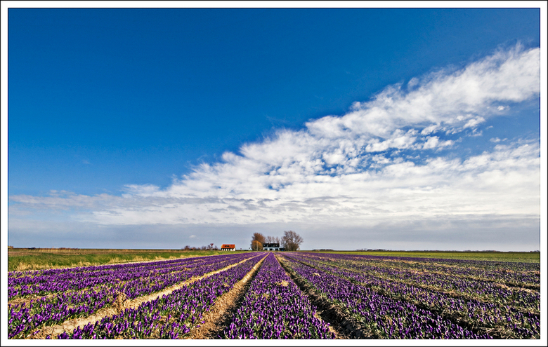 Voorjaar op Texel 2 - Naar aanleiding van de opbouwende kritiek van mede zoomers, hierbij een opname van hetzelfde onderwerp alleen ander standpunt en