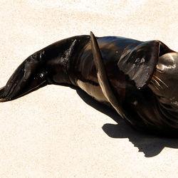 Sea world, San Diego...