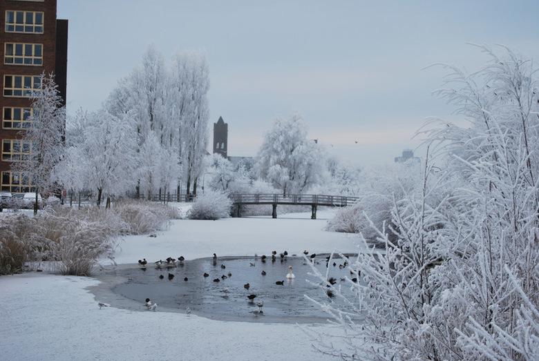 Winters gezicht - Gezicht over de Potmarge Leeuwarden