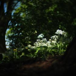 Daslook - fotowedstrijd puur natuur inzending 3