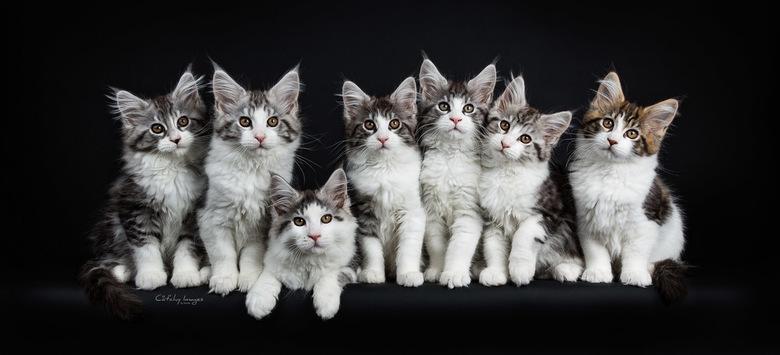 Spiritwalker's kittens