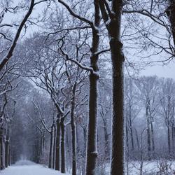 Kronkelige boomtakken