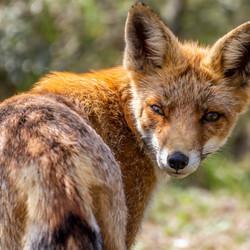 Foxxie the photomodel