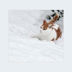 Bobje en sneeuw:)