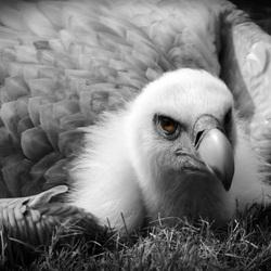 een vogel waar je naar blijft kijken