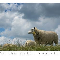 On the dutch mountains