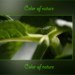 Color of nature