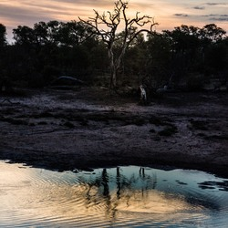Romantiek in Kruger Park
